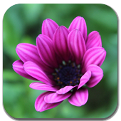 Flora Wallpapers App